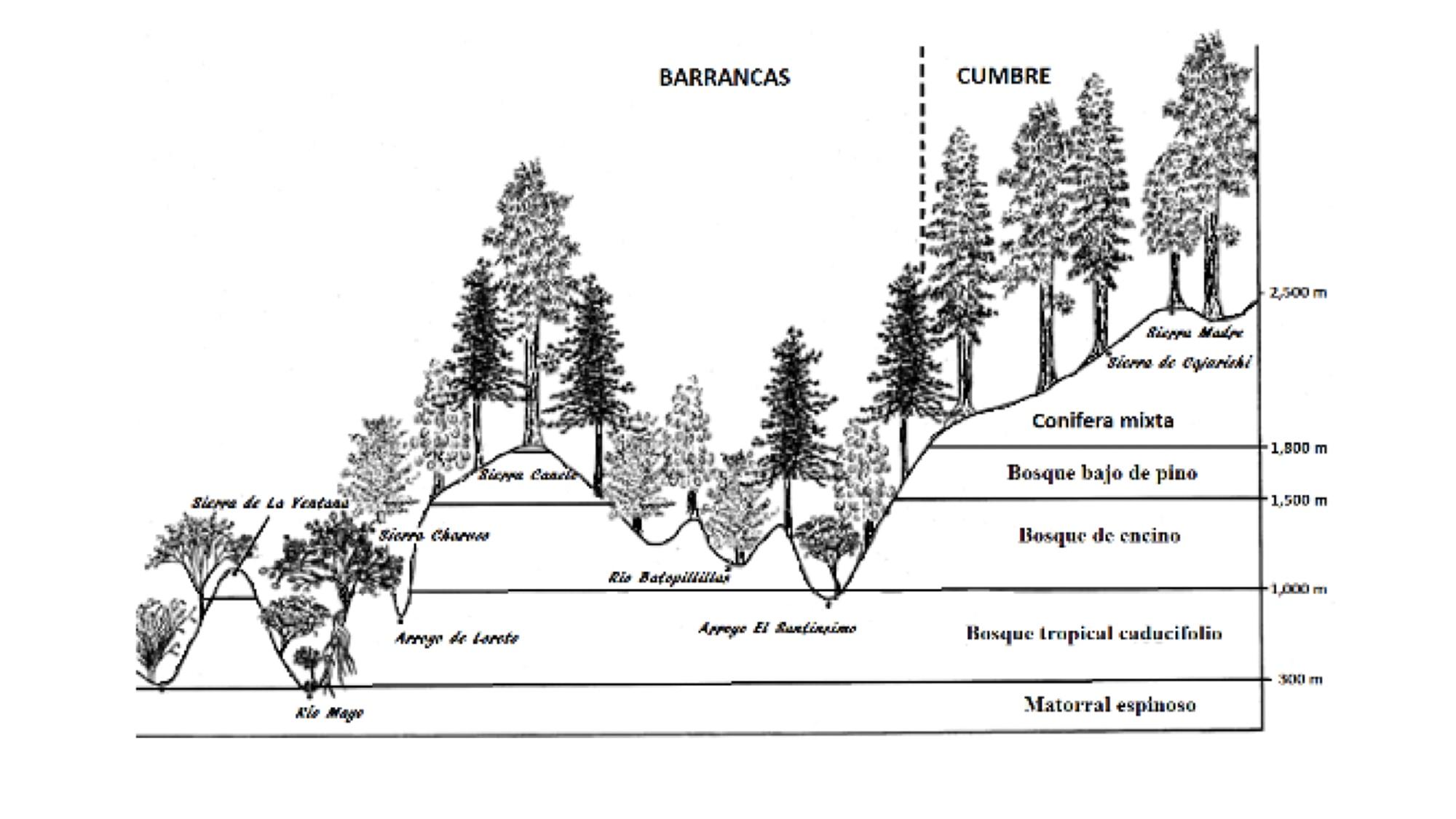 ecosistema tierra norte